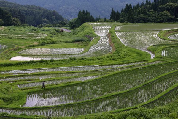 A rice farmer walks through terraced paddy fields in Yabu City, Hyogo Prefecture, Japan, on Wednesday, June 25, 2014. Along with five other areas, Yabu, 650 kilometers west of Tokyo, was designated as a strategic special zone, loosening regulations in areas such as agriculture, medicine and labors. Photographer: Tomohiro Ohsumi/Bloomberg